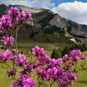 Цветущий Алтай - Алтай Фото, автор: Rain