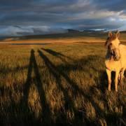 Про длинные тени и белого коня