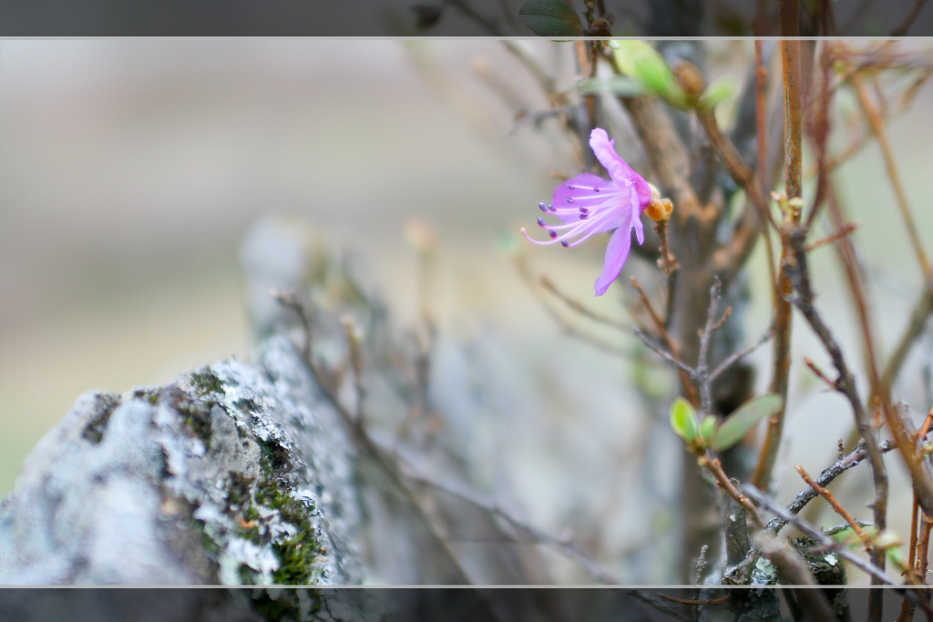 и на скалах растут цветы слушать